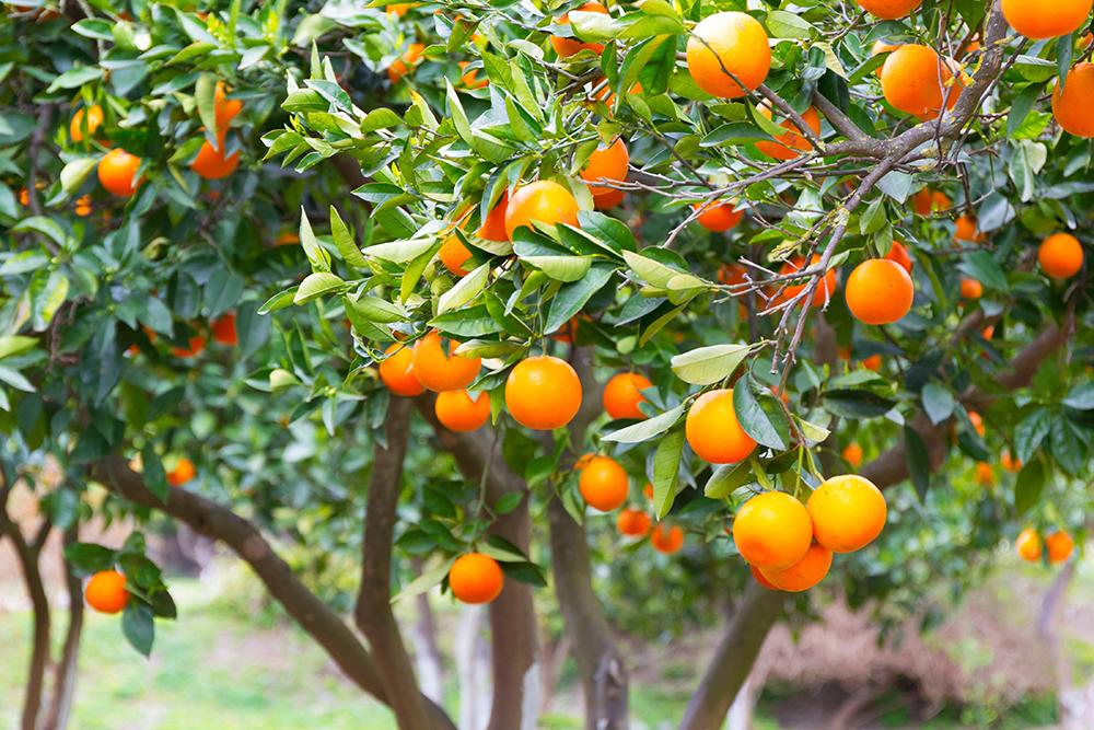 fruit2 width=
